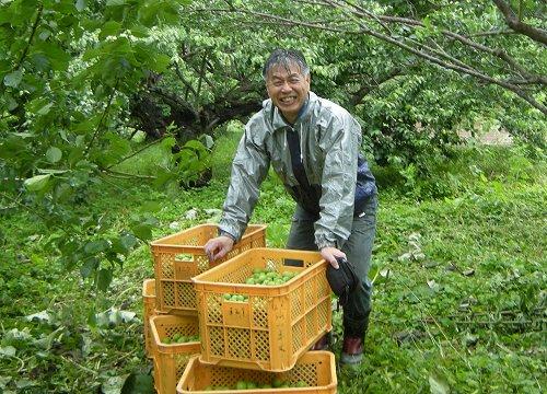 梅づくり12収穫喜び